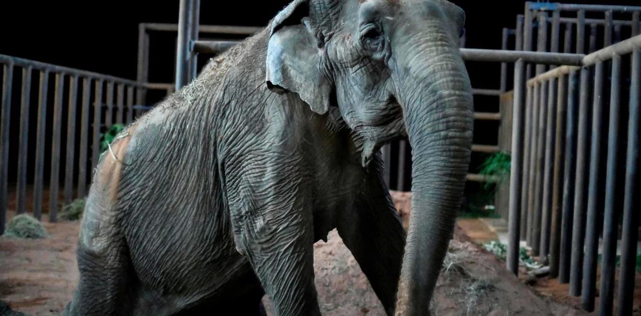Resultado de imagen para elefanta ramba